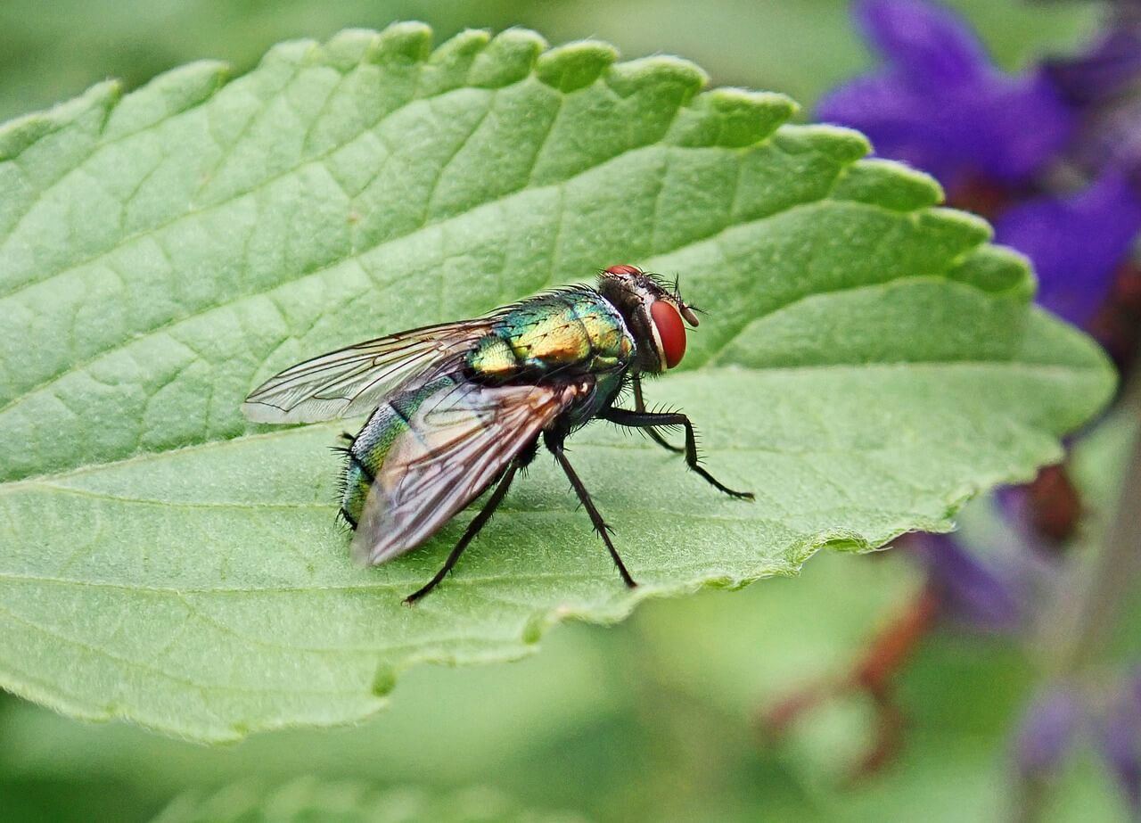 how to control pests in industrial areas